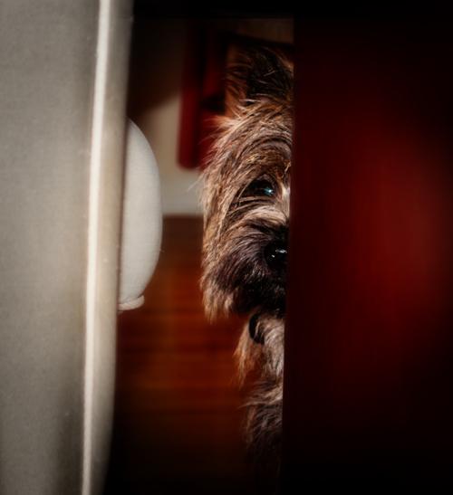PeekingPiperSmall