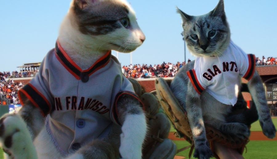 Cats in Giants Jerseys photo by Ave Valencia
