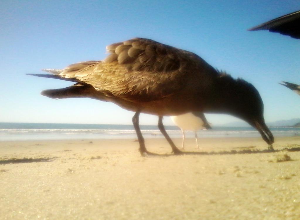 Seagull Diaries