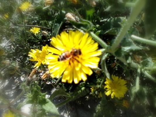 blurry honey bee