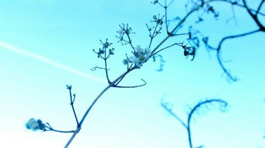 seeds blue sky macro, semillas cielo azul