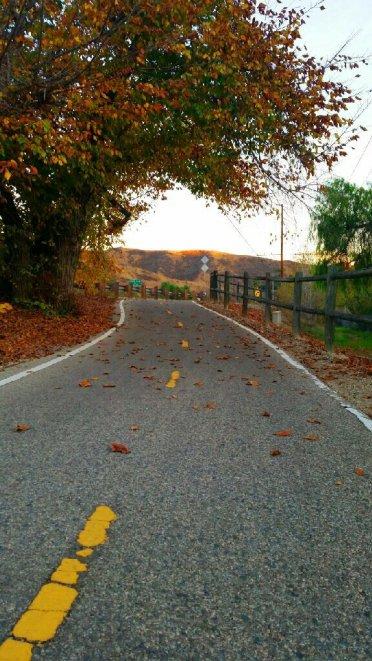 Camino Ventura hojas secas cerros