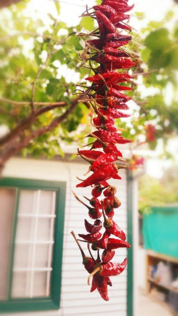 chiles rojos, red chiles