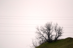 HWY 5 San Fernando Valley Tree by Ave Valencia