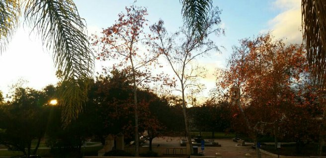 ojai-libbey-park-sunset-avevalencia.jpg