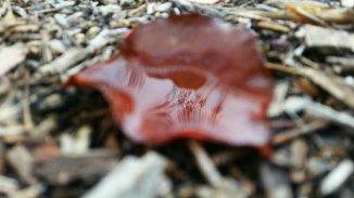 red-leaf-ojai-1-avevalencia.jpg