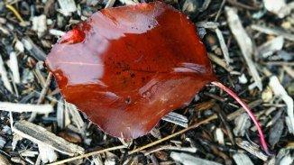 red-leaf-ojai-5-avevalencia.jpg
