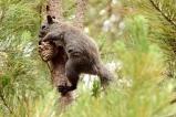 squirrel and pine cone, Cambria California