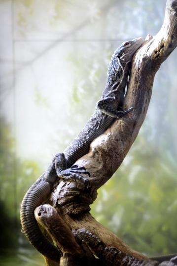 blue lizard vertically against branch