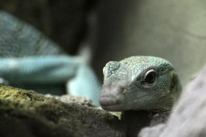 Green lizard sexy pose close up