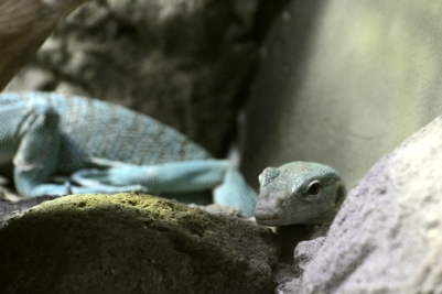 green lizard sexy pose