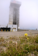 Erect rocket amidst fog, yellow flower in foreground