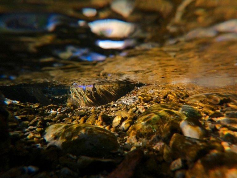 purple flower floating in brook, underwater view, brown rocks reflecting warm light