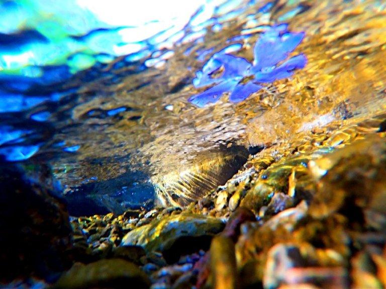 purple flower floating in brook, underwater view, yellow light bouncing off rocks