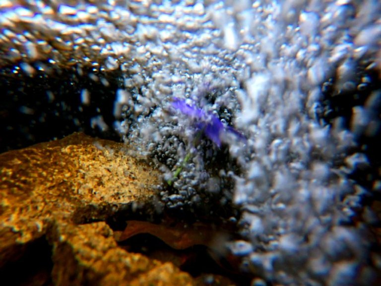 purple flower submerged in bubbly brook