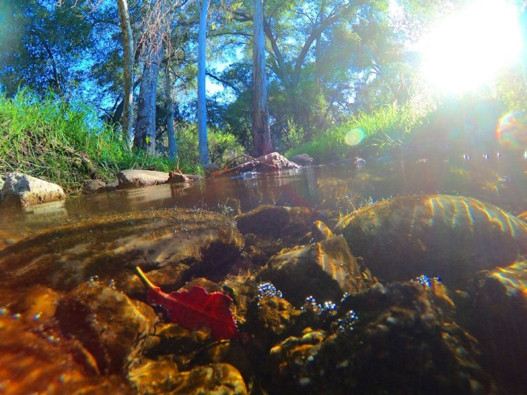 creek underwater, rocks and red leaf, grass and trees above surface
