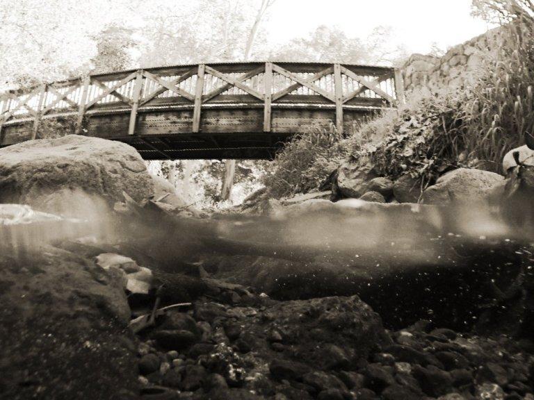 Wooden bridge over creek, black and white