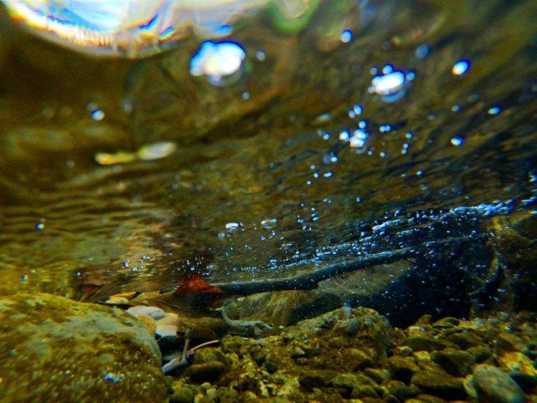 creek underwater, rocks, red leaf and stick