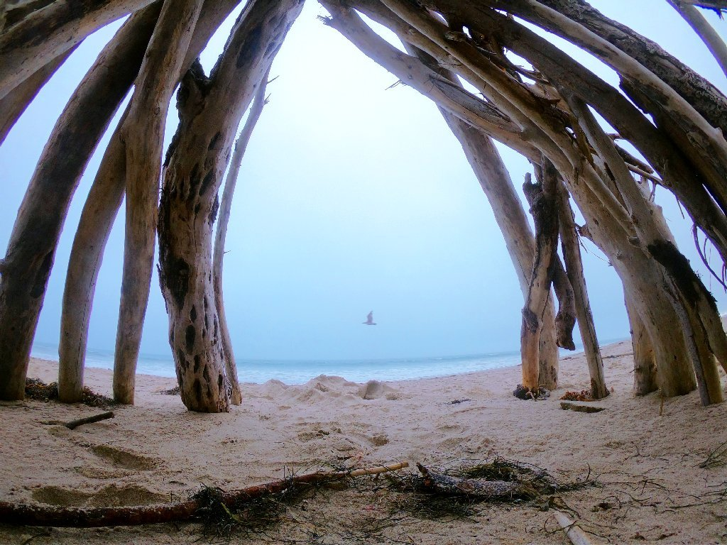 sand in foreground with dry seaweed and a teepee made from driftwood forming an arch, silhouette of a bird in flight over ocean in background