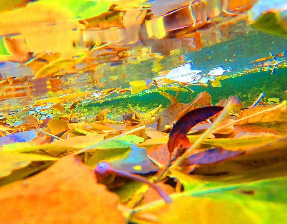 bright yellow leaves under blue green water
